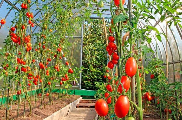 инфракрасный обогрев теплиц для высоких растений